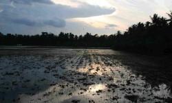 The Mekong-Delta: Treasure chamber of nature